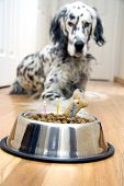 "Dog in front of his ""Birthday cake"" with candles poster"