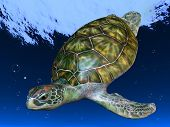 Underwater Picture of the Turtle, Red sea poster