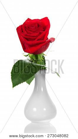 Fragrant Red Rose In A Small White Vase Isolated On White Background