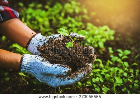 Woman Asia Plant Agriculture Vegetable. Women Dig Into Soil The Vegetable Garden Cultivation And Sep
