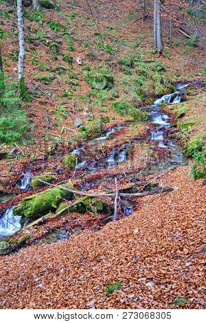 Mountain Brook Flowing In Forest, Autumn Scene