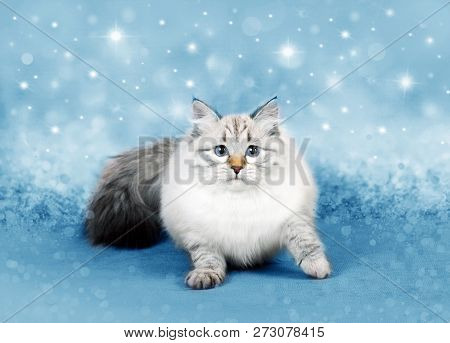 Christmas Cat In A Xmas Magic Decor