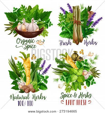 Spices And Herbs, Organic Condiments And Food Seasonings. Vector Parsley, Mint And Basil, Garlic, Nu