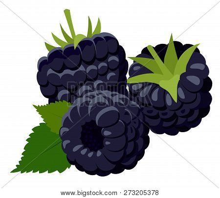 Blackberries. Group Of Two Ripe Blackberries With Green Leaves Isolated On White Background. Forest
