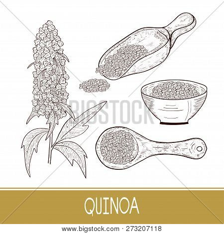 Quinoa. Plant. Spoon, Bowl With Seeds. Sketch. Set.