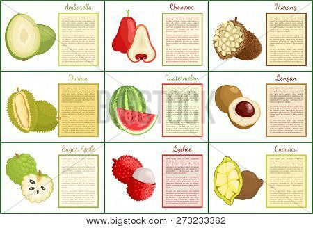 Ambarella Chompoo Posters Set With Text Sample Vector. Tropical Exotic Fruits Sugar Apple, Lychee An