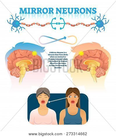 Mirror Neurons Vector Illustration. Medical Brain Action Explanation Scheme. Educational Diagram Wit