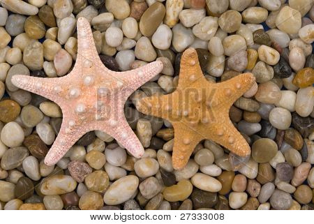 Two starfish on beach pebbles