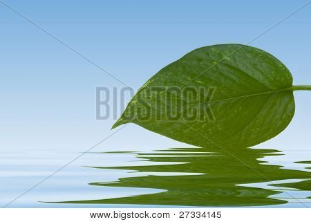 A green leaf with water reflection