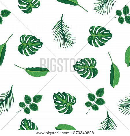 Foliage Pattern Of Green Tropical Plant, Palm And Tree On White Background. Pattern Green Leaves Mon