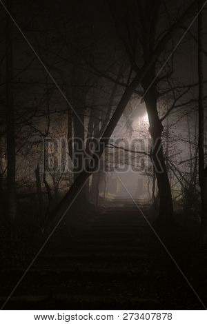 Mysterious Stony Stairs In Dense Fog At Night In Forest. Horror And Mystery Concepts.