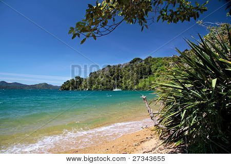 Beach  In The Marlborough Sounds