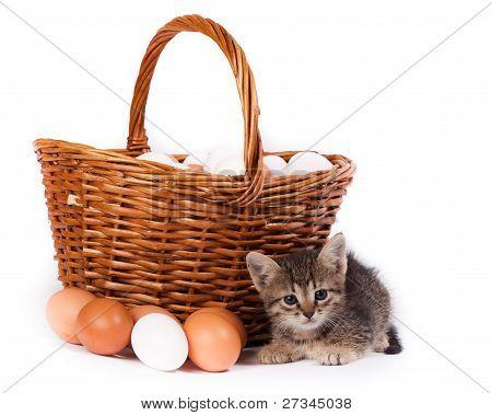Kitten Und Eggs
