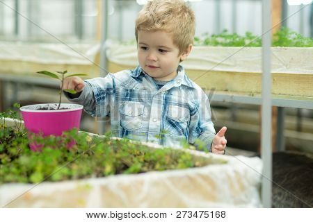 Kid In Greenhouse. Kid In Greenhouse Working With Flowers. Small Kid In Greenhouse Growing Trees. Ki