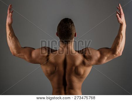 Body Builder, Muscled Male, Strong Man, Bodybuilder, Muscular Man, Strong Male. Brawny Guy Bodybuild