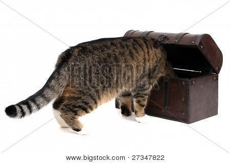 treasure chest with inquisitively cat on white poster
