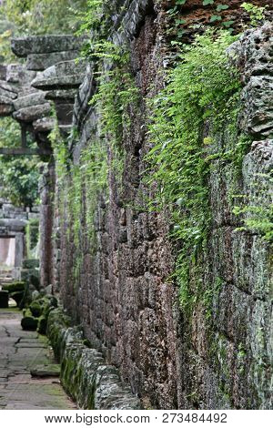 Distance Of A Stone Wall Fading With Ferns And Moss Growing On  All Over It