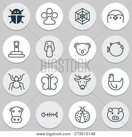 Zoology Icons Set With Mallard, Spider Web, Butterfly And Other Duck Elements. Isolated Vector Illus