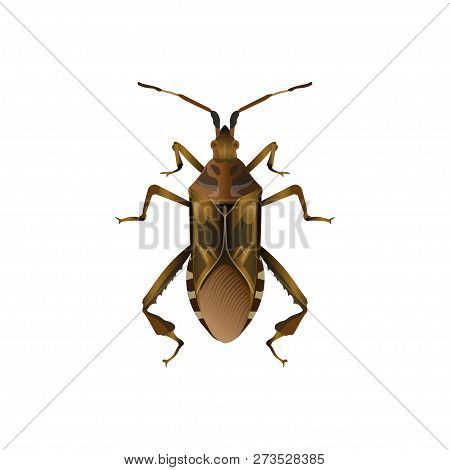 Western Conifer Seed Bug. Vector Illustration Isolated On White Background