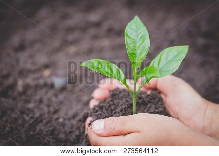 Child Hands Holding And Caring A Young Green Plant, Seedlings Are Growing From Abundant Soil, Planti