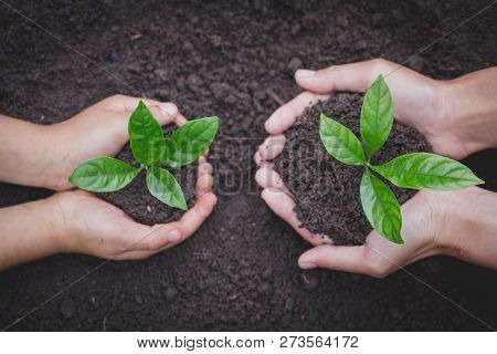 The Hands Of The Woman And Child To Plant The Seedlings In The Soil, Plant A Tree, Reduce Global War