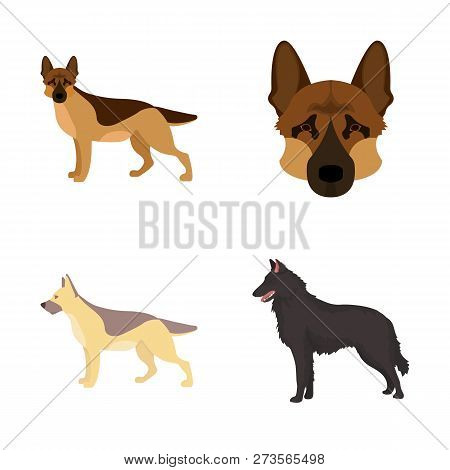 Isolated Object Of  And Sheepdog Sign. Set Of  And German Stock Vector Illustration.