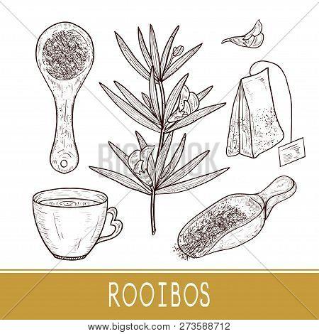 Rooibos. Plant. Scoop Of Tea, Cup, Sachet. Sketch. Set.