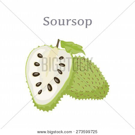 Soursop Whole And Cut Fruit Vector Isolated On White. Annona Montana Edible Medicinal Plant In Annon