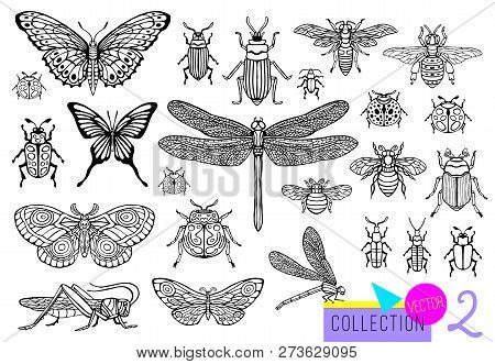 Big Hand Drawn Line Set Of Insects Bugs, Beetles, Honey Bees, Butterfly Moth, Bumblebee, Wasp, Drago