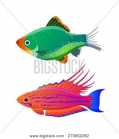 Filamented Flasher Wrasse And Green Tiger Barb. Freshwater Aquarium Pets Silhouette Icon On Blank Ba