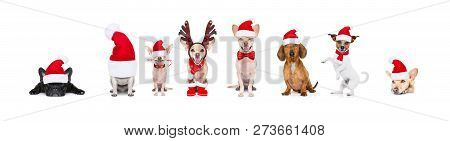 Christmas  Santa Claus Row Of Dogs Isolated On White Background,  With   Funny  Red Holidays Hat  An