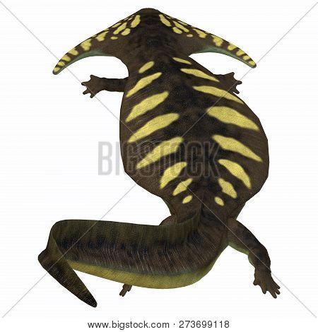 Diplocaulus Amphibian Tail 3d Illustration - Diplocaulus Was An Amphibian That Lived In The Permian