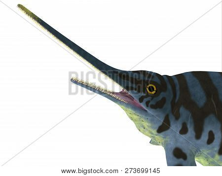 Eurhinosaurus Reptile Head 3d Illustration - Eurhinosaurus Was A Carnivorous Ichthyosaur Reptile Tha