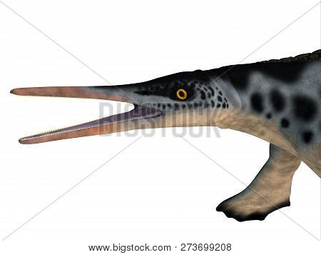 Hupehsuchus Reptile Head 3d Illustration - Hupehsuchus Was An Ichthyosaur Marine Reptile That Lived