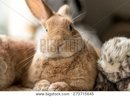 Rufus Bunny Rabbit Looks Cute Surrounded By Plush Fluff Toys In Soft Lighting, Neutral Tones