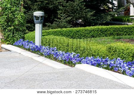 Modern Garden Design With Box Trees Bushes And Plants Near The Path