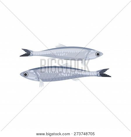 Detailed Flat Vector Icon Of Two Small Sprats. Tasty Seafood. Marine Animal. Cooking Theme
