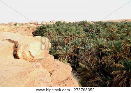 Profuse Palm Grove In A Valley In Morocco