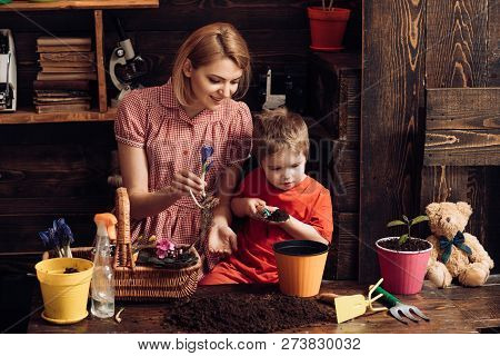 Floral Concept. Little Son Help Mother Planting Flowers In Pot, Floral Decor. Mother And Child Work