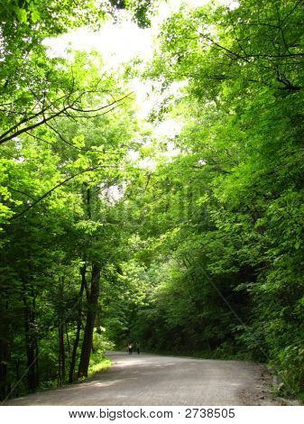 Forest Gravel Road