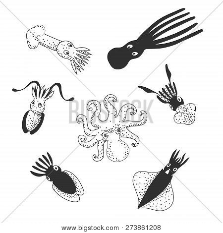 Set Of Cute Sea Monsters, Cephalopods (octopus, Cuttlefish, Squid). Black And White Hand Drawing Vec