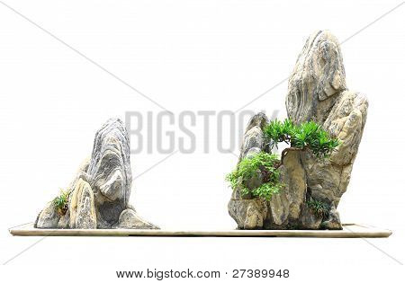 Rockery Bonsai