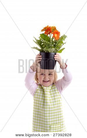 Laughing Little Girl Holding A Pot With Orange Flowers (gerbera)