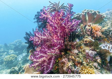 Dendronephthya Is A Genus Of Soft Corals In The Family Nephtheidae.