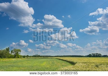 Whirling Clouds In The Sky. Sunny Day. Slightly Cloudy Sky. Puffy Clouds Float In The Sky. They Are