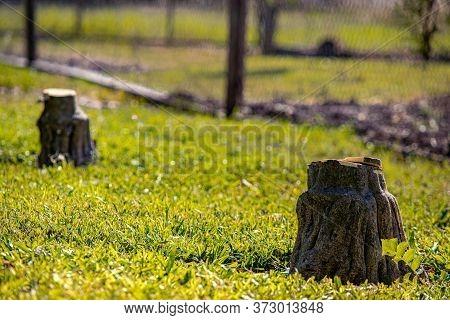 Trunk Of A Felled Tree, Dead Tree