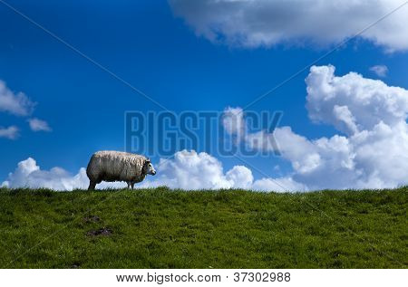one sheep on the horizon over blue sky poster