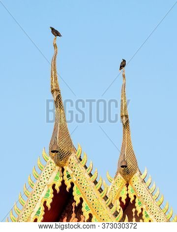 Two White-vented Mynas, Acridotheres Grandis, Perching On The Gable Apex Of A Temple, Clear Blue Sky