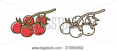 Bright Cherry Tomatoes On Branch Vector Illustration In Line Art Style. Set Of Colorful And Monochro