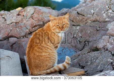 Portrait Of A Red Pensive Cat. A Beautiful Homeless Cat. Serious Red Cat. Striped Pensive Cat.